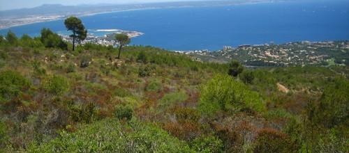 La superficie forestal en Baleares disminuye un 1% en una década