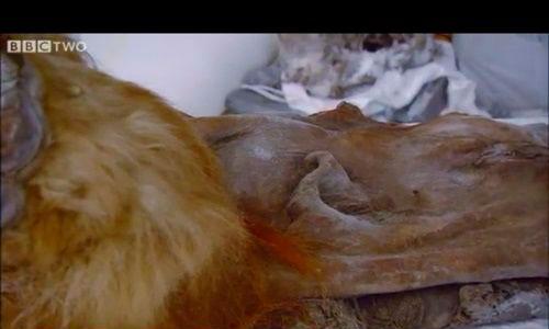 Hallada sangre líquida en los restos de un mamut