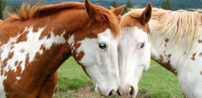 Dermatólogos niegan el milagro anticaída del champú para caballos