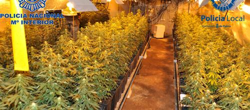 Desmantelada una plantación de marihuana en Sa Casa Blanca