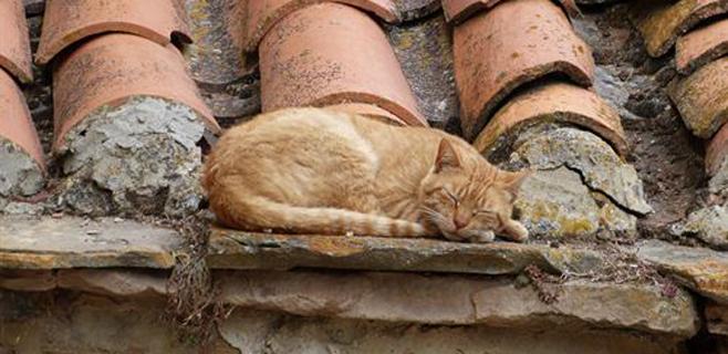 Los excrementos de gato, un problema de salud pública