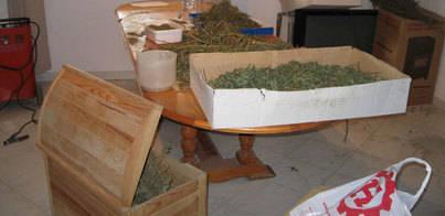 La Guardia Civil detiene a una pareja en Algaida con 14 kilos de marihuana