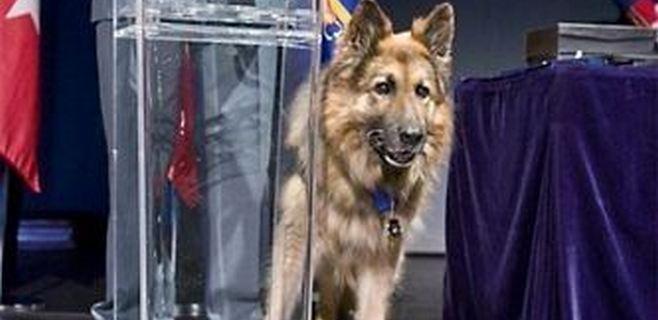 Fallece Ajax, el perro que evitó la masacre