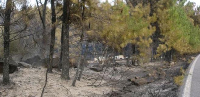 Se reaviva el incendio de Selva que se inició y apagó el pasado sábado