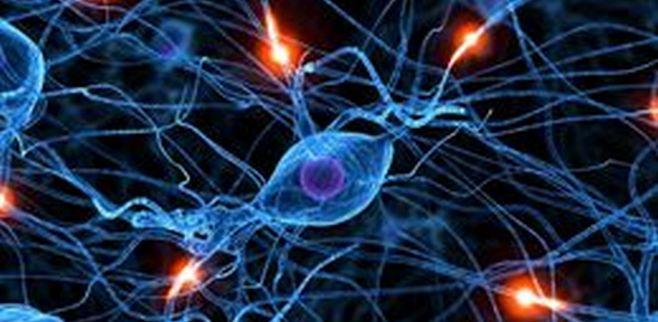 Descubierta una molécula que regula el estado de ánimo