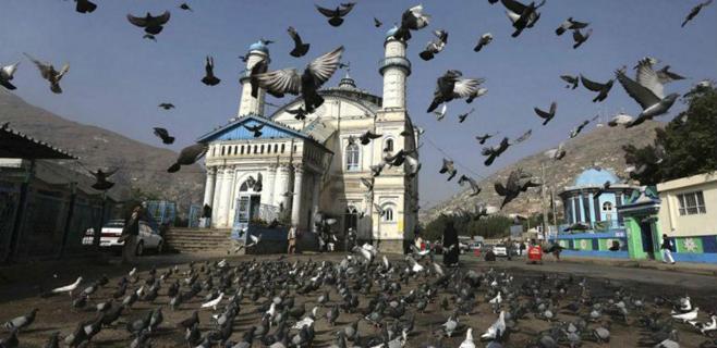 La invasión de las palomas zombis