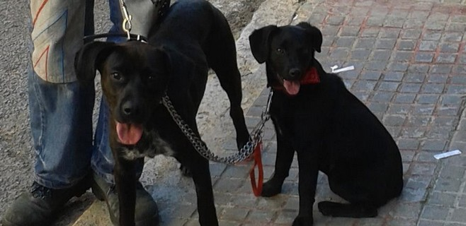 Cort ha abierto 488 expedientes por faltas a la ordenanza de animales