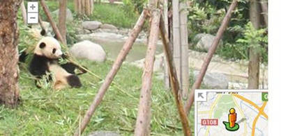 Los zoos de todo el mundo llegan a Google Street View