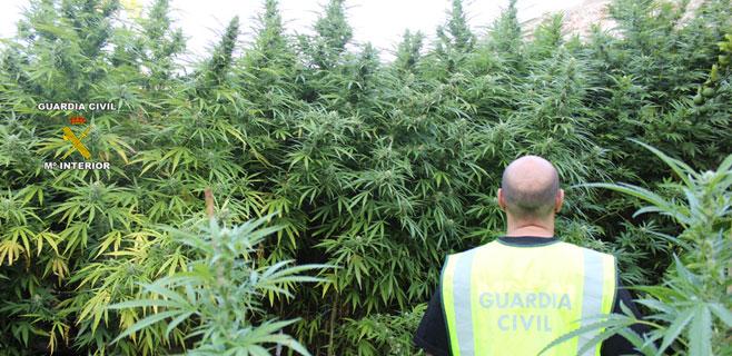 Aumentan un 32% los delitos por tráfico de drogas respecto al año anterior
