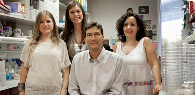 Células madre embrionarias en seres vivos adultos