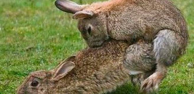 Lotus despide a Raikkonen con dos conejos copulando