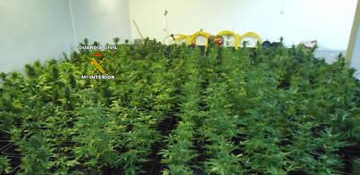 Detenidos dos jóvenes en Llubí por tener una plantación de marihuana