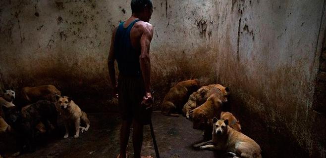 China, denunciada por maltrato a perros para convertirlos en carne