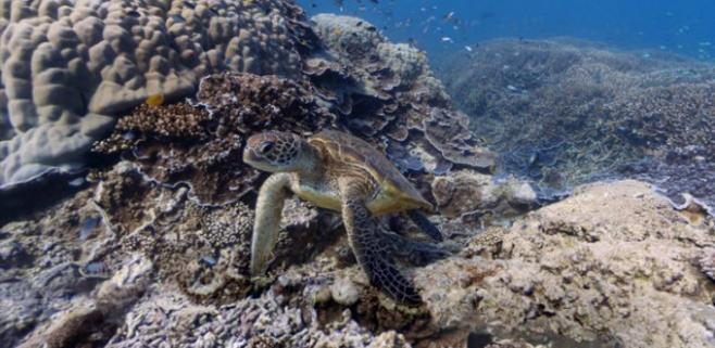 Google street view, ahora bajo el mar