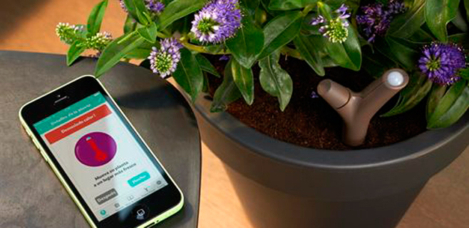 Llega una app que cuida tus plantas