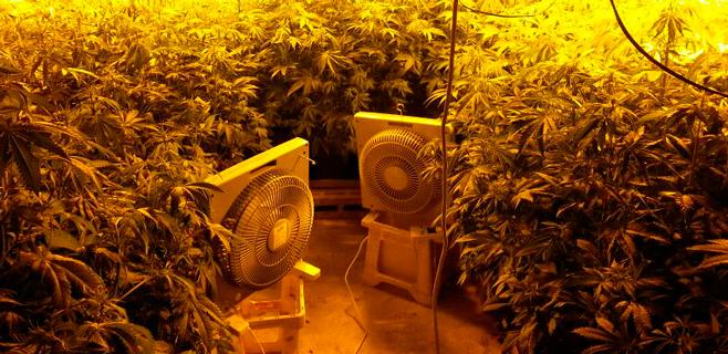 La Guardia Civil interceptó casi una tonelada de marihuana en 2013