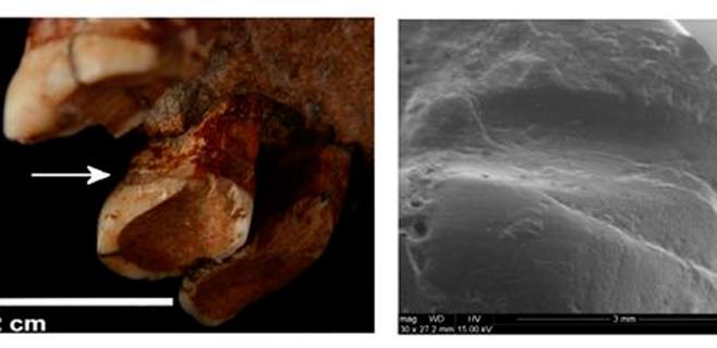 Los neandertales ya usaban palillos