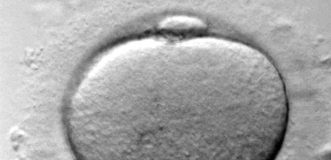 Los óvulos vitrificados obtienen tanto éxito como los frescos