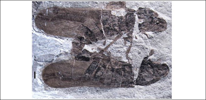 Hallado un fósil con la evidencia más antigua de sexo entre insectos