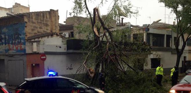 El viento provoca más de 60 incidentes