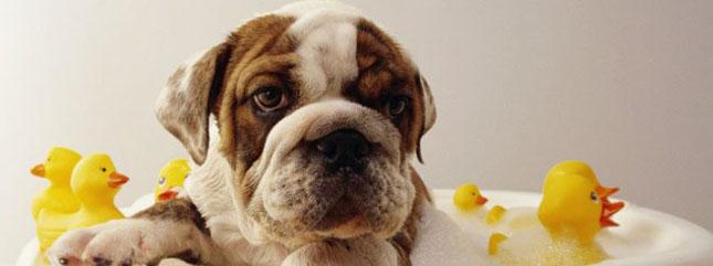 La vulnerabilidad del baño canino