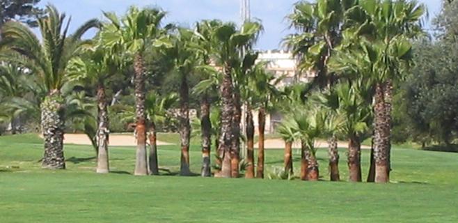 Los buzos raestrean las lagunas del golf de Son Ferrer en busca de Malén