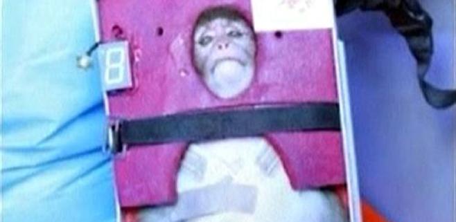 Irán lanza con éxito un mono al espacio