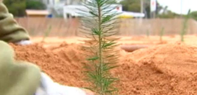 Ses Covetes cambia los apartamentos por árboles