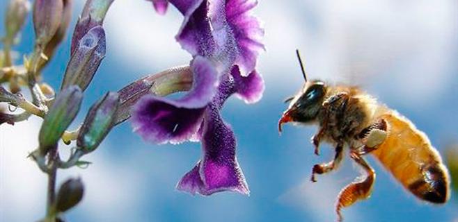 Los pesticidas reducen el tamaño de las abejas obreras