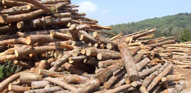 Jornada sobre el empleo de la biomasa para usos térmicos