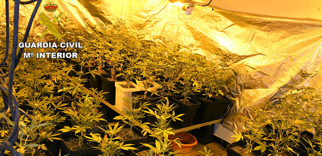 Incautadas 1.100 plantas de cannabis en un edificio del Coll d´en Rabassa