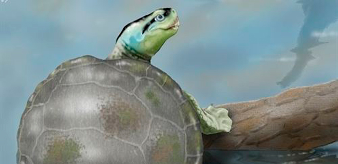 Hallado el caparazón de una tortuga única en el Jurásico