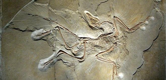El primer pájaro de la Tierra no fue el Archaeopteryx