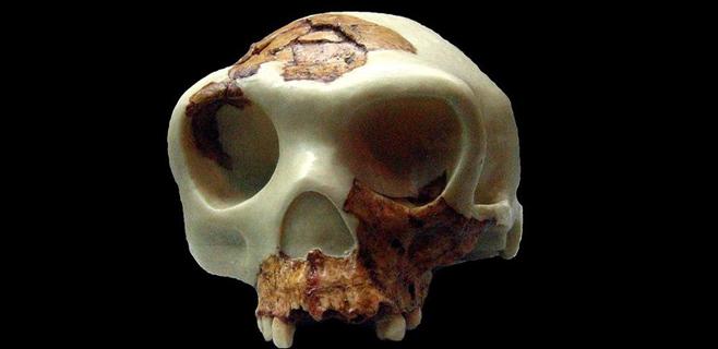 El Homo Antecessor vivió 120.000 años antes de lo pensado
