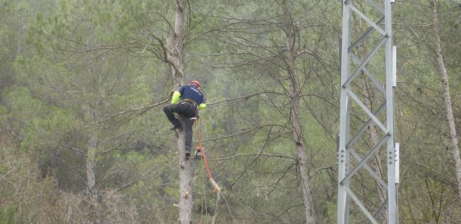 Endesa limpia la masa forestal de su línea eléctrica