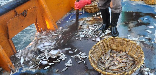 El Govern pide una excepción ante Europa en los descartes pesqueros