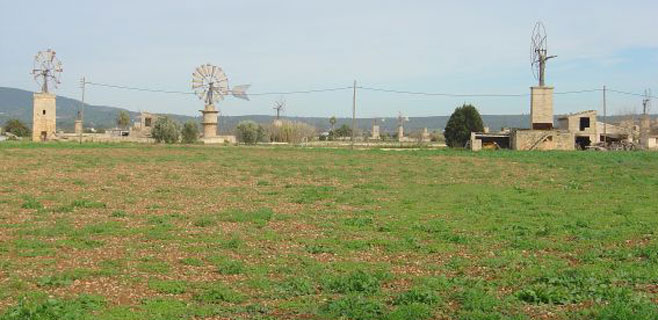Cort quiere 3.000 hectáreas del Pla de Sant Jordi para producir biomasa
