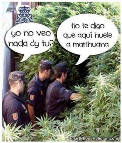 Que los árboles no te impidan ver... la marihuana