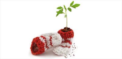 Un árbol para cada niño nacido en 2013