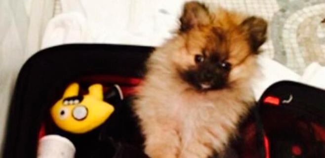 Miley Cyrus ya tiene nuevo perro