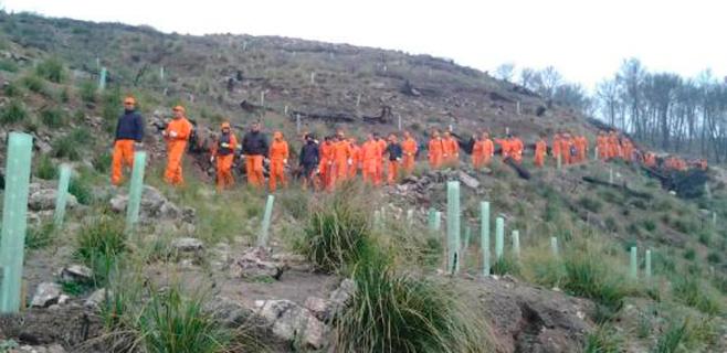 Mil voluntarios consiguen recuperar 6,5 hectáreas calcinadas en la Serra