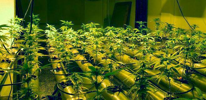 Detenido un hombre por cultivar marihuana en su vivienda de Sa Ràpita