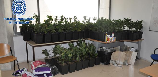 Hallada una plantación de marihuana durante una ejecución hipotecaria