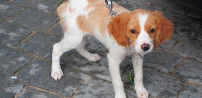 España, a la cabeza en abandono de animales de compañía