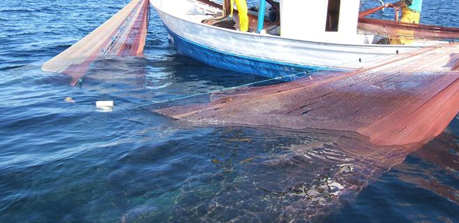 La temporada del jonquillo se cierra en Balears con 17,4 toneladas capturadas