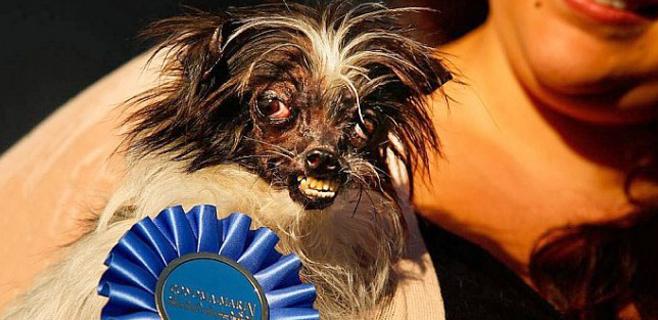 Penaut es el perro más feo del mundo