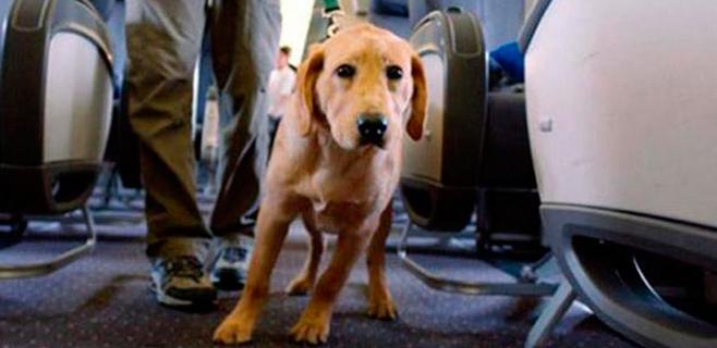 Un perro con diarrea provoca un aterrizaje forzoso