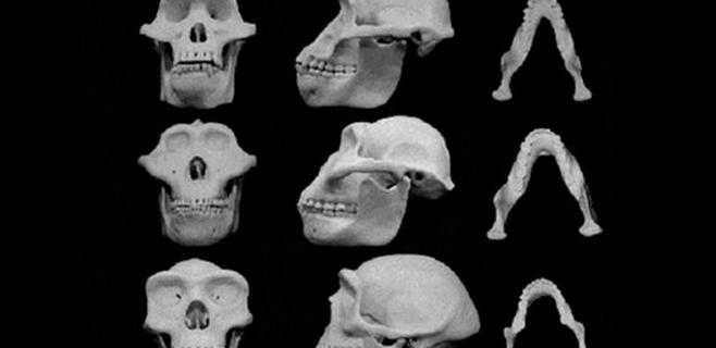 Los rasgos faciales masculinos evolucionaron a golpes