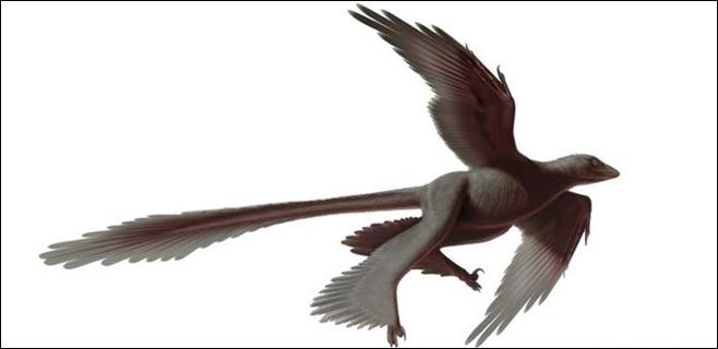 Hallado un nuevo dinosaurio con 4 alas