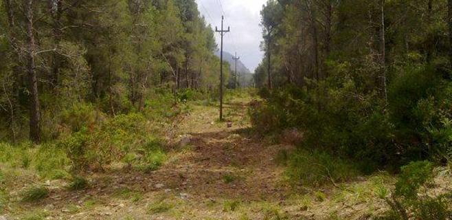 Endesa invierte 710.000€ en limpieza forestal